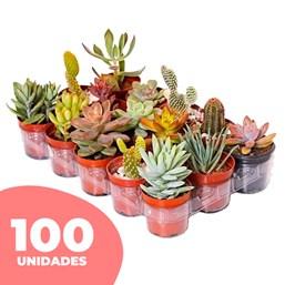 100 Mini Suculentas Pote 06 - Modelos Variados