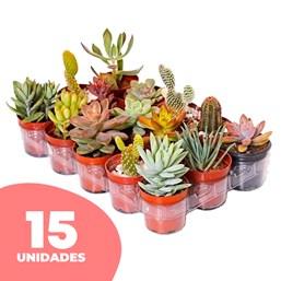 15 Mini Suculentas pote 06 - Modelos Variados