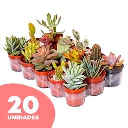 20 Mini Suculentas Pote 06 - Modelos Variados