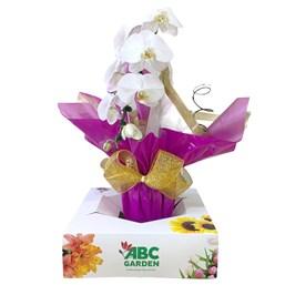 Arranjo com 2 Orquídea Phalaenopsis Cascata Roxa no Vaso de Vidro Colorido