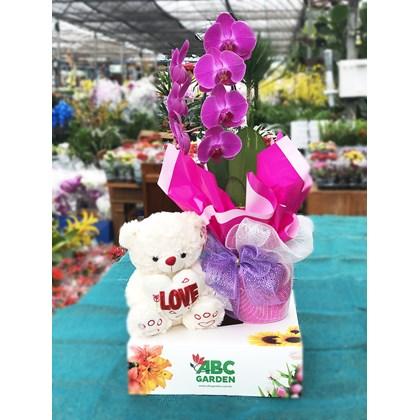 Arranjo Da Flor Orquídea Rosa Cascata Com Urso De Pelúcia
