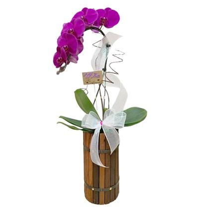 Arranjo de Oquídea Phalaenopsis Cascata Roxa - Madeira 2