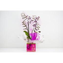 Arranjo de Orquídea Branca Com Caixa Rosa