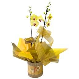 Arranjo de Orquídea Phalaenopsis Amarela