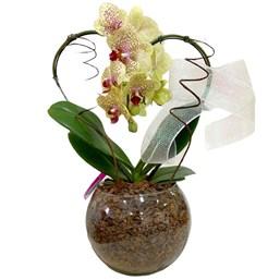Arranjo de Orquídea Phalaenopsis Amarela Mesclada - Coração 3