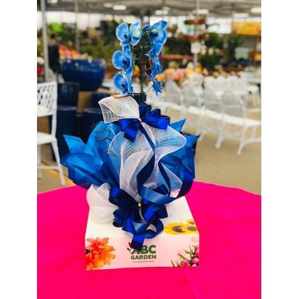 Arranjo De Orquídea Phalaenopsis Azul