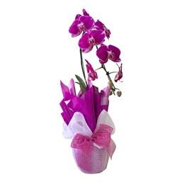 Arranjo de Orquídea Phalaenopsis Cascata Roxa 1
