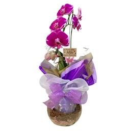 Arranjo de Orquídea Phalaenopsis Cascata Roxa 2