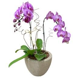 Arranjo de Orquídea Phalaenopsis Cascata Roxa Mesclada 1