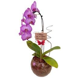 Arranjo de Orquídea Phalaenopsis Cascata Roxa Mesclada 2