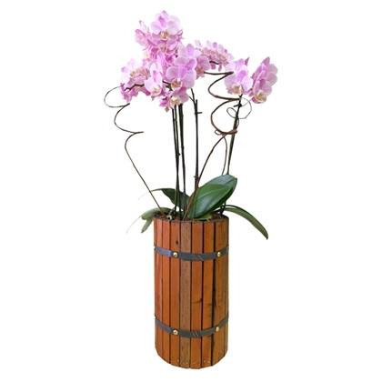 Arranjo de Orquídea Phalaenopsis Rosa - Madeira 1