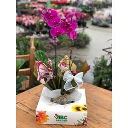 Arranjo De Orquídea Phalaenopsis Roxa