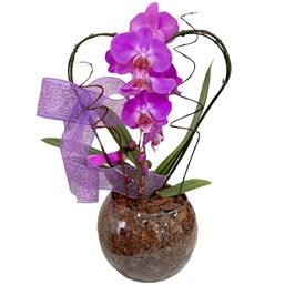 Arranjo de Orquídea Phalaenopsis Roxa - Coração 2