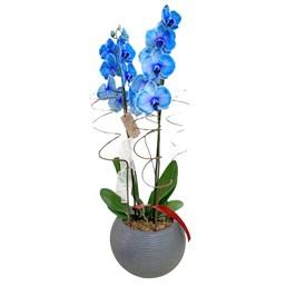 Arranjo de Orquídeas Azul no cachepô de Alumínio Preto