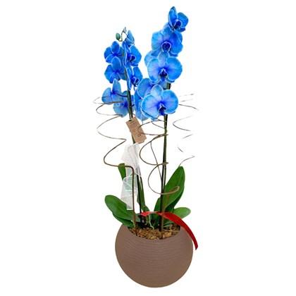 Arranjo de Orquídeas Azul - Vaso Marrom