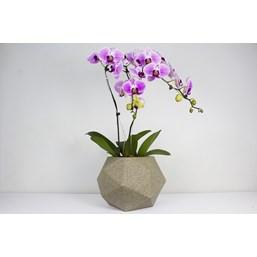 Arranjo Elegante Phalaenopsis Cascata Rosa