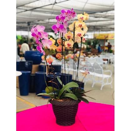 Arranjo Mix Orquídeas Phalaenopsis