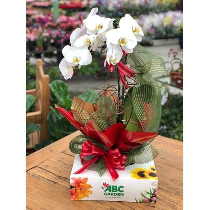 Arranjo Moderno De Orquídea Branca