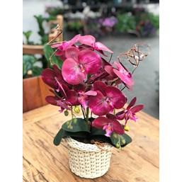 Arranjo Permanente (Artificial) Orquídea Phalaenopsis Rosa