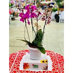 Arranjo Phalaenopsis Cascata Roxa