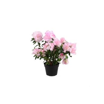 cf24b1405 Azaléia Rosa Claro Pote 15 - ABC Garden