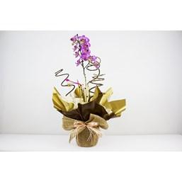 Charmoso Arranjo De Orquídea Phalaenopsis