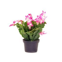 Flor de Maio Pote 11 - Cores Variadas