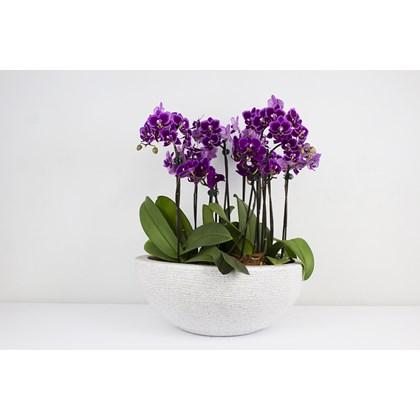 Luxuoso Arranjo De Orquídeas Roxas