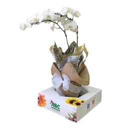 Magnífico Arranjo de Orquídea Cascata