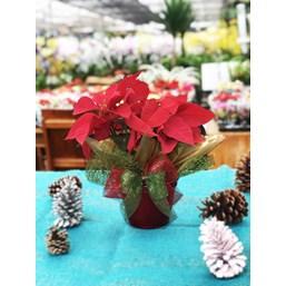 Poinsétia Pote 14 Especial De Natal Pote Vermelho